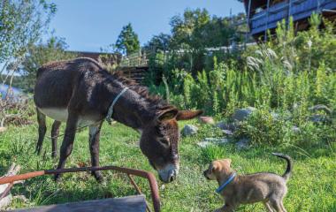 ロバと子犬